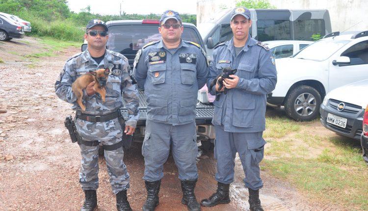 12º BPM RECEBE DOAÇÃO DE CÃES PARA POLICIAMENTO